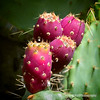 Prickly pear cactus fruit...