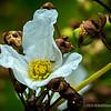 Fullerton Arboretum wildflower...