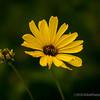 Wild daisies...