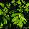 Green Green...