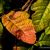 Colorful leaf...