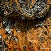 Yucca bark...