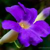 Trumpet flower...