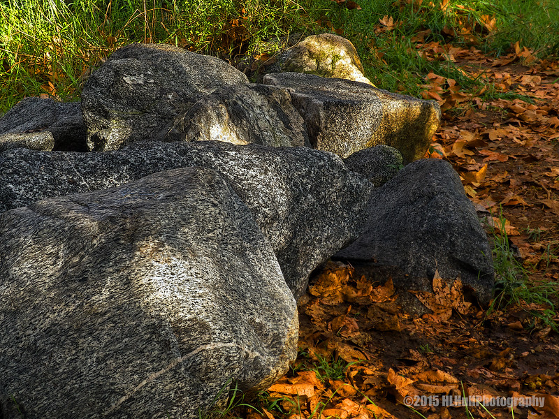 Rocks and leaves...