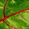 Beet leaf...