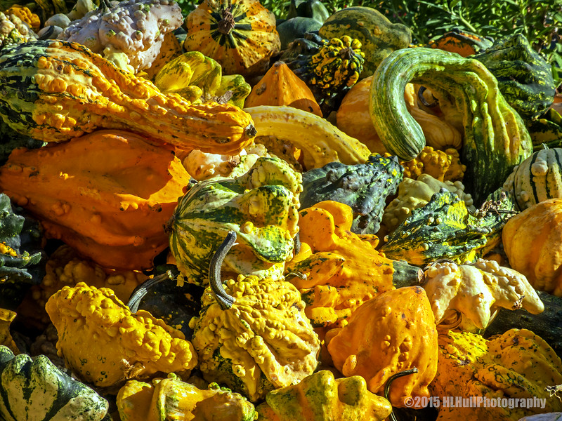 Colorful gourds...