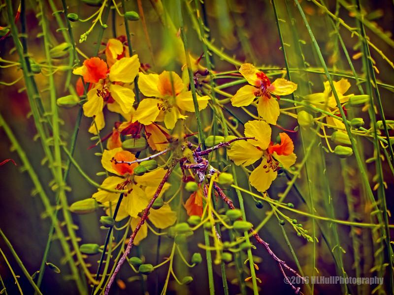 Beautiful little flowers...