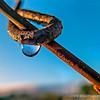 Dew drop...