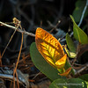 A colorful leaf...