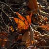Leaves...
