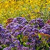 Hyacinths and daisies...