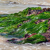 Seaweed...