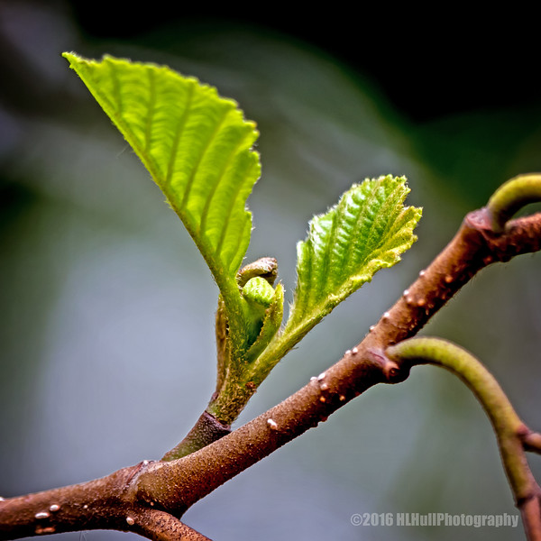 New growth...