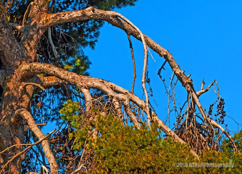 Old tree...