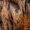 Palm tree bark...