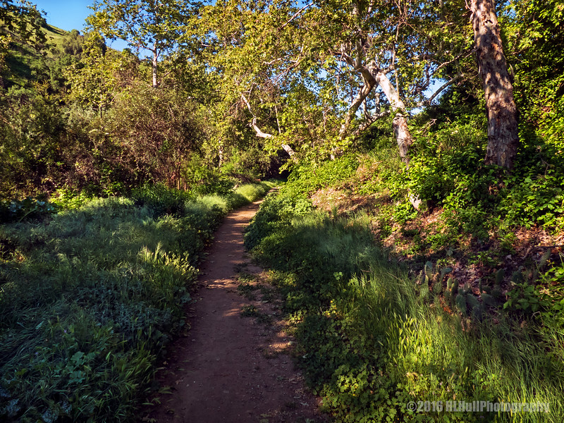 Sycamore Canyon Trail...