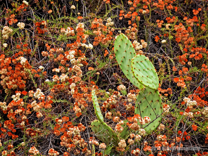 Cactus and wildflowers...