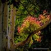 Eucalyptus Leaves...