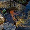 Leaves in a Stream...