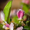 Apple blossoms and raindrops...