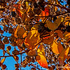 Colorful leaves...