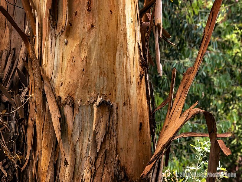 Eucalyptus bark...