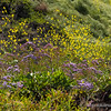 Wildflowers...