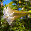 Fullerton Arboretum Flower...
