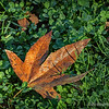 A leaf in the grass...