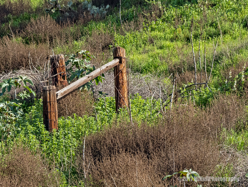 Old Fence Posts...