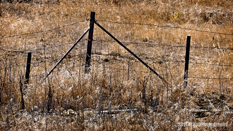Old Fence...