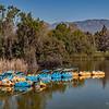 Paddle boats...