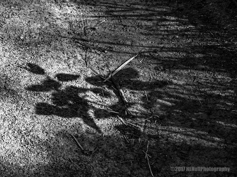 Mornings shadows...