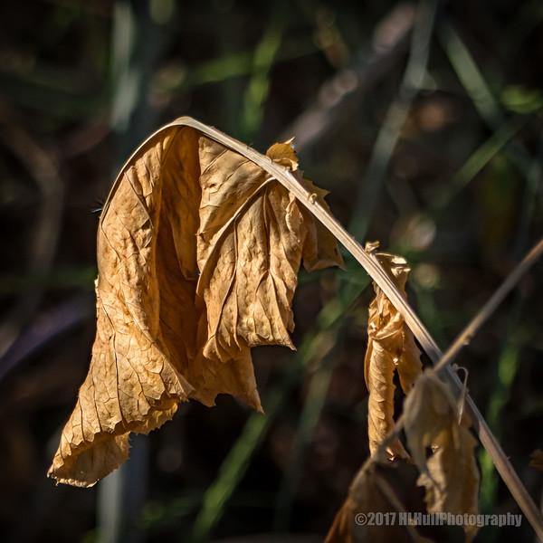 Dried Up...