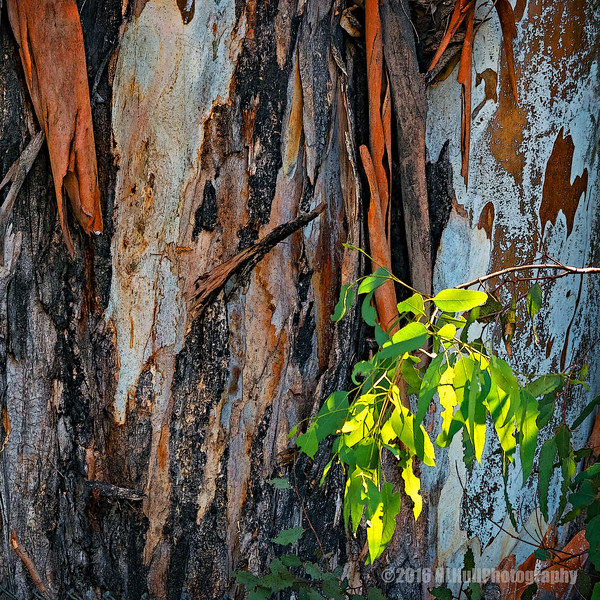 Leaves and bark...