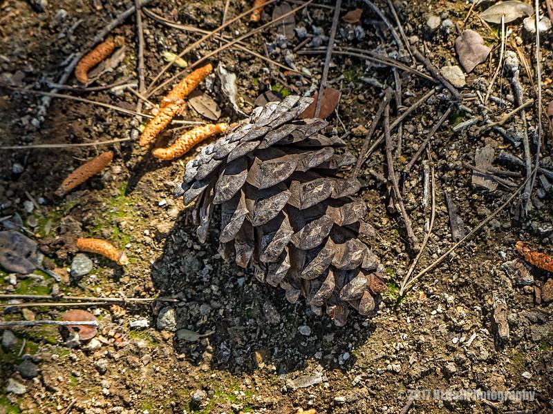 Pine cone...