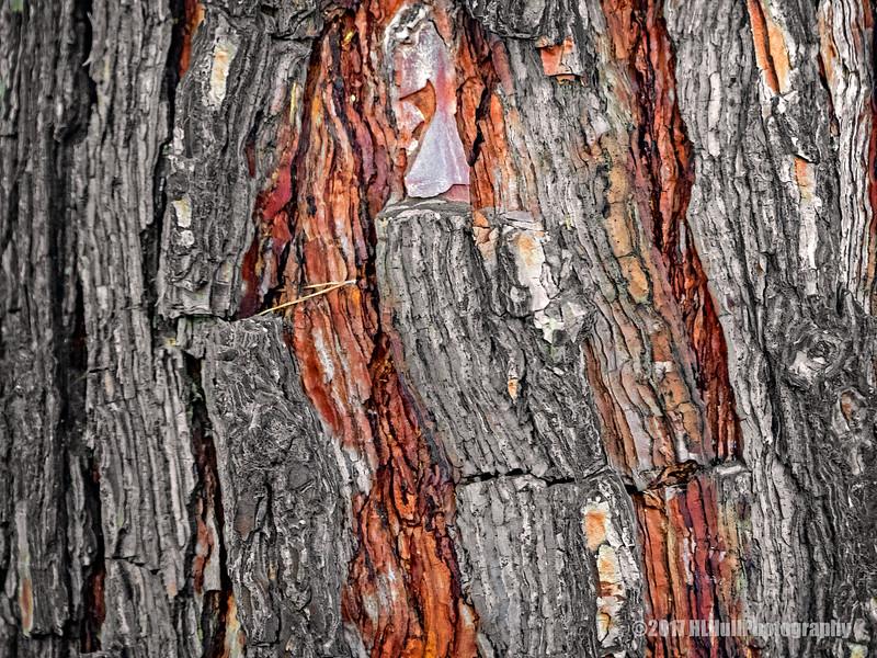 Pine bark...