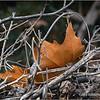 Fallen leaves...