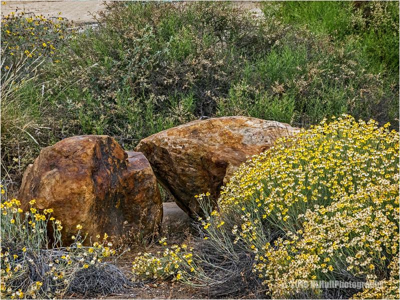 Rocks and Wildflowers...