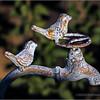 Birds on a faucet...