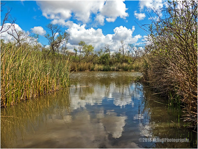 San Joaquin Marsh & Wildlife Sanctuary
