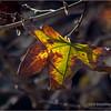 Old leaf...