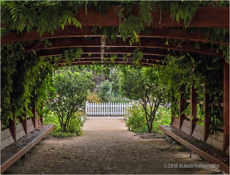 Looking through the arbor...