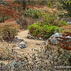 Fullerton Arboretum...
