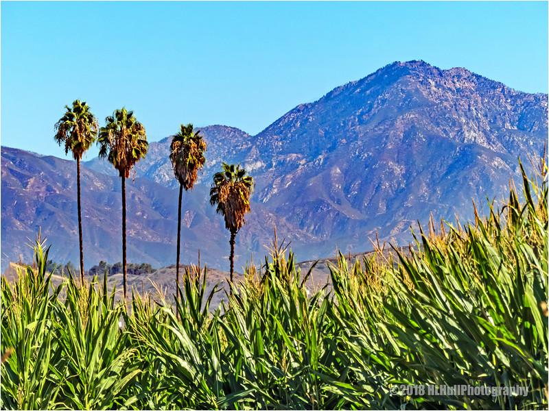 San Gabriel Mountains...