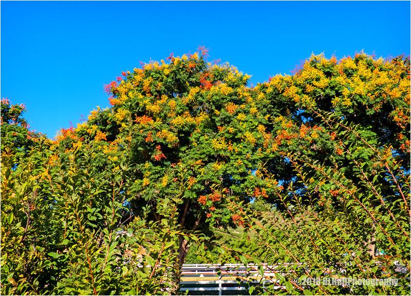 Flowering Trees...