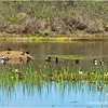 San Joaquin Marsh & Wildlife Sanctuary...