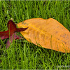 Leaves in the grass...