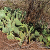 Cactus along the trail...