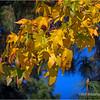 Fall leaves...